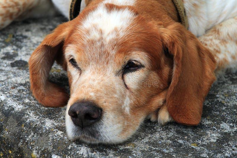 Portret van de jonge hond op straat stock afbeelding