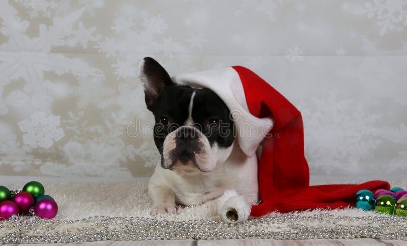 Portret van de Kerstmis het Franse buldog stock afbeelding