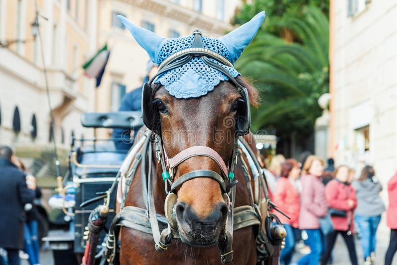 Portret van door paarden getrokken vervoerpaard stock afbeeldingen