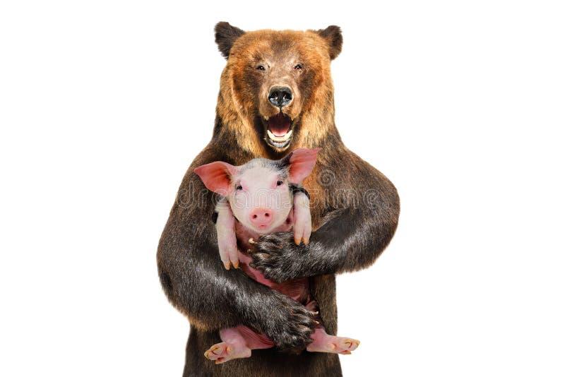Portret van een bruine beerholding in de poten van een klein varken stock foto's