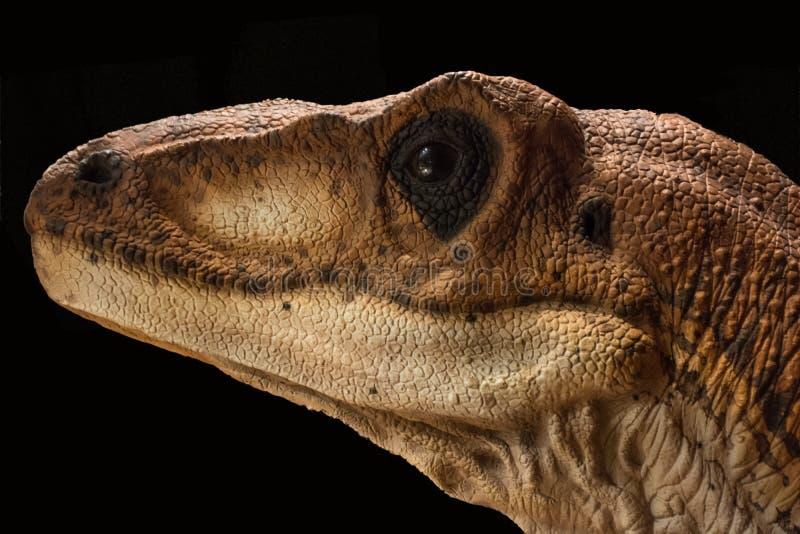 Portret van een dinosaurus genoemd velociraptor op zwarte achtergrond stock foto's
