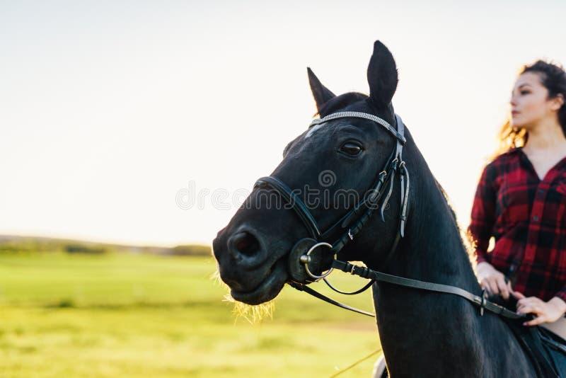 Portret van een donker paard en een ruiterzitting op hem stock afbeelding