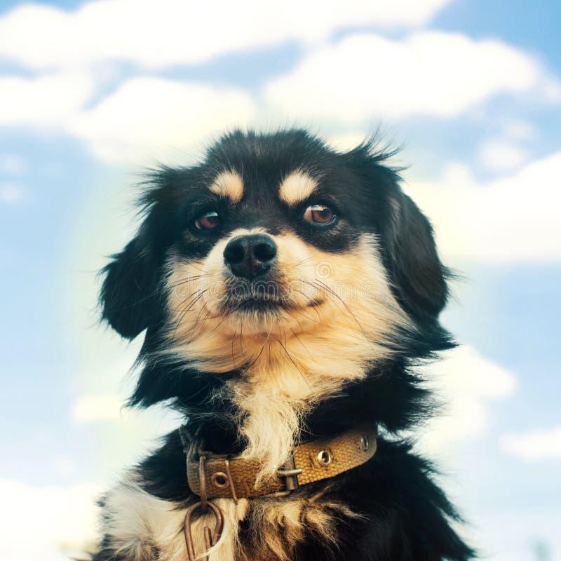 Portret van een ernstige zwarte hond met menselijke emotionson een blauwe hemelachtergrond binnenlands huisdier, dier stock foto's
