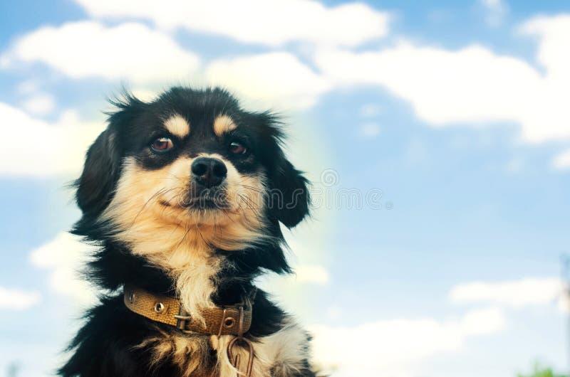 Portret van een ernstige zwarte hond met menselijke emotionson een blauwe hemelachtergrond binnenlands huisdier, dier Plaats voor stock foto