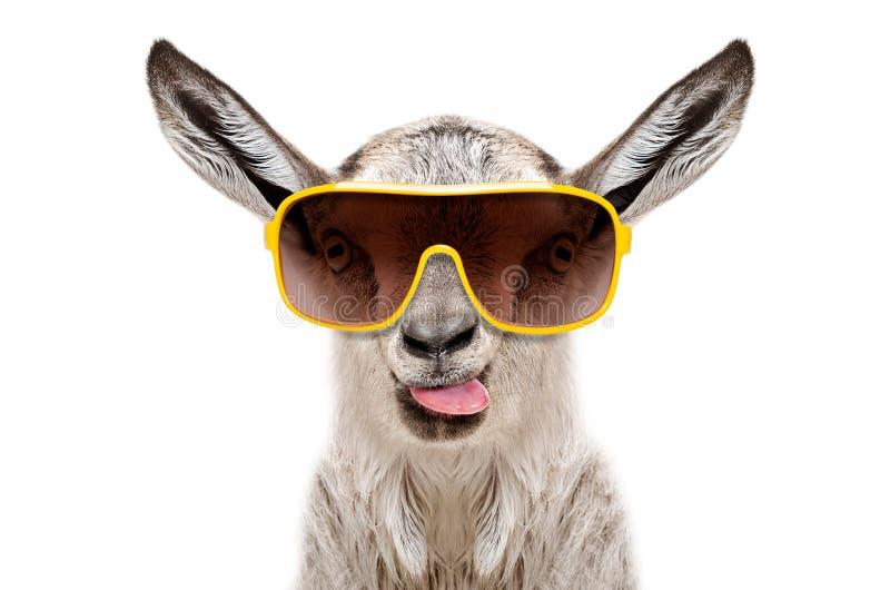 Portret van een geit in zonnebril die tong tonen royalty-vrije stock foto's