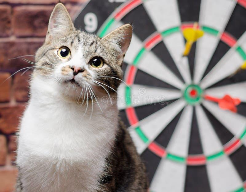 Portret van een gestreepte katkat tegen de achtergrond van een cirkel van pijltjes royalty-vrije stock afbeeldingen