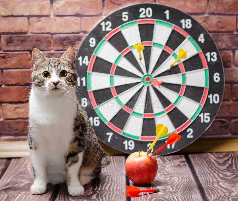 Portret van een gestreepte katkat tegen de achtergrond van een cirkel van pijltjes royalty-vrije stock foto's