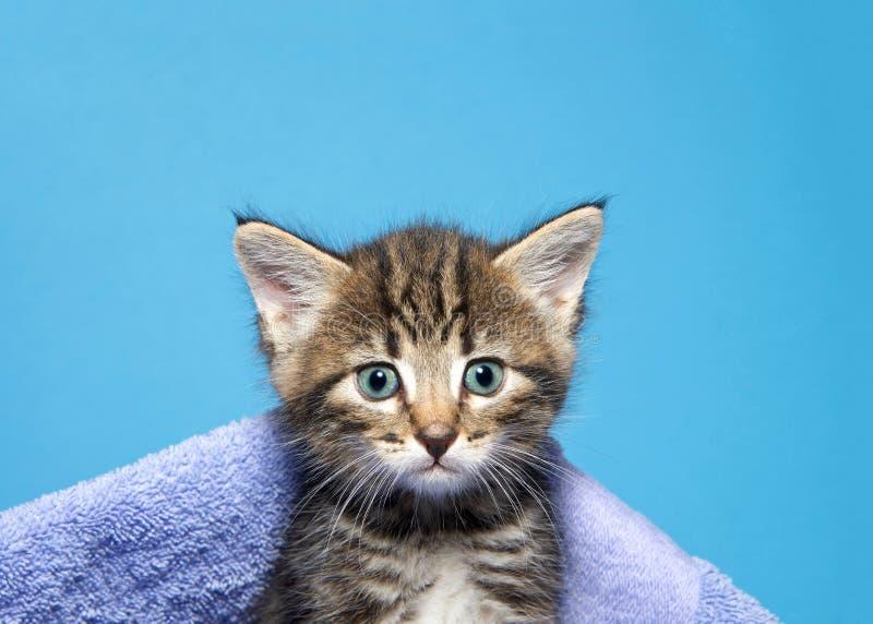Portret van een gestreepte katkatje die uit een deken gluren royalty-vrije stock foto