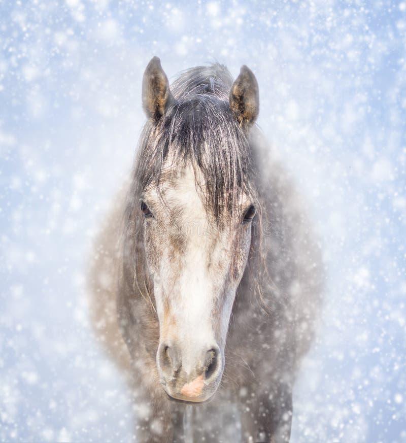 Portret van een grijs paard in de wintersneeuw stock afbeeldingen
