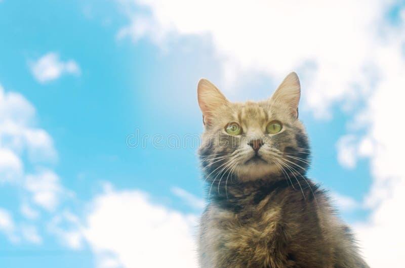 Portret van een grijze kat op blauwe hemelachtergrond Leuk huisdier Grappig dier Zachte selectieve nadruk royalty-vrije stock foto