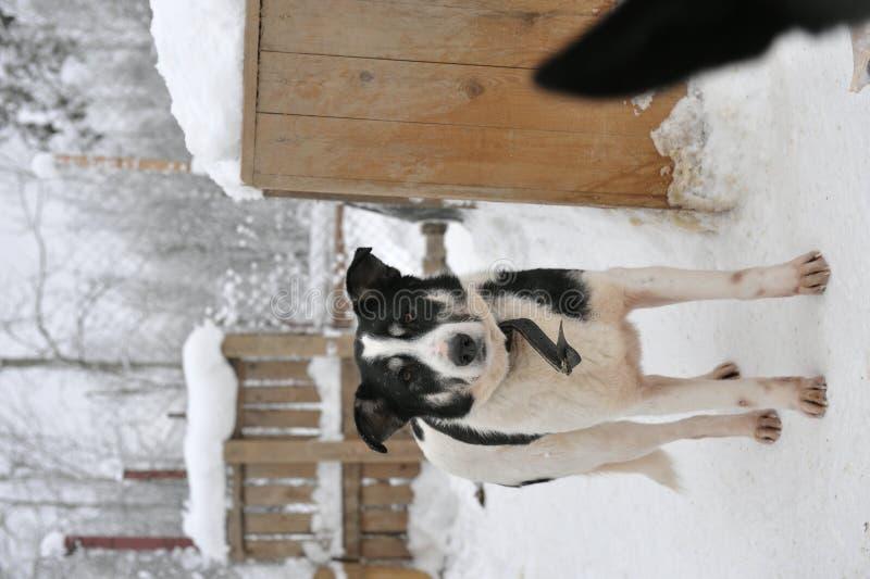 Portret van een hond. royalty-vrije stock foto's