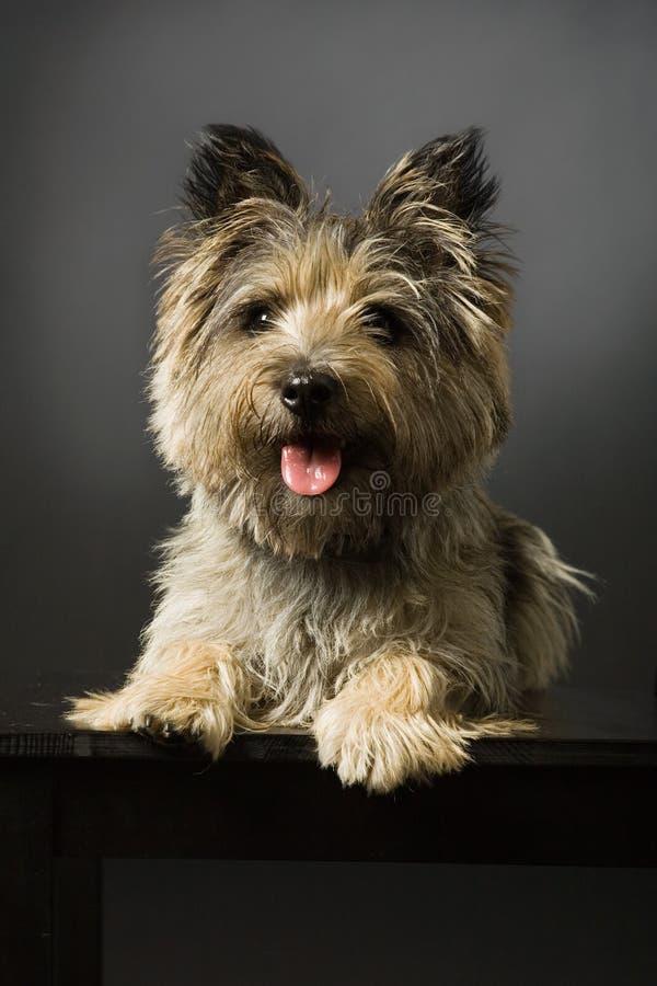 Portret van een hond stock afbeeldingen