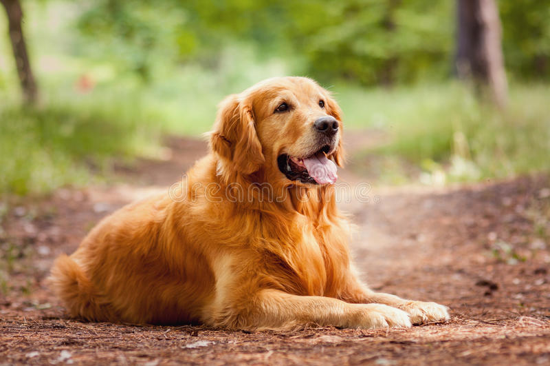Portret van een hond royalty-vrije stock foto
