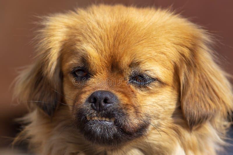 Portret van een hond in de middag royalty-vrije stock fotografie