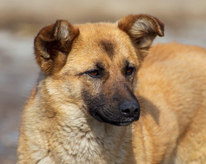 Portret van een hond in de middag stock afbeelding