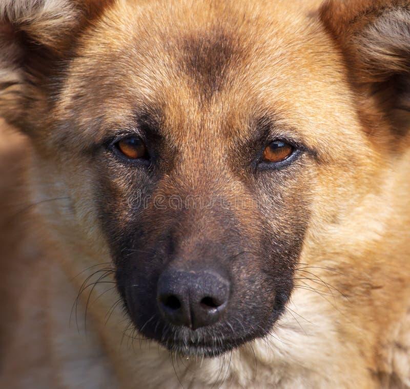 Portret van een hond in de middag royalty-vrije stock afbeelding