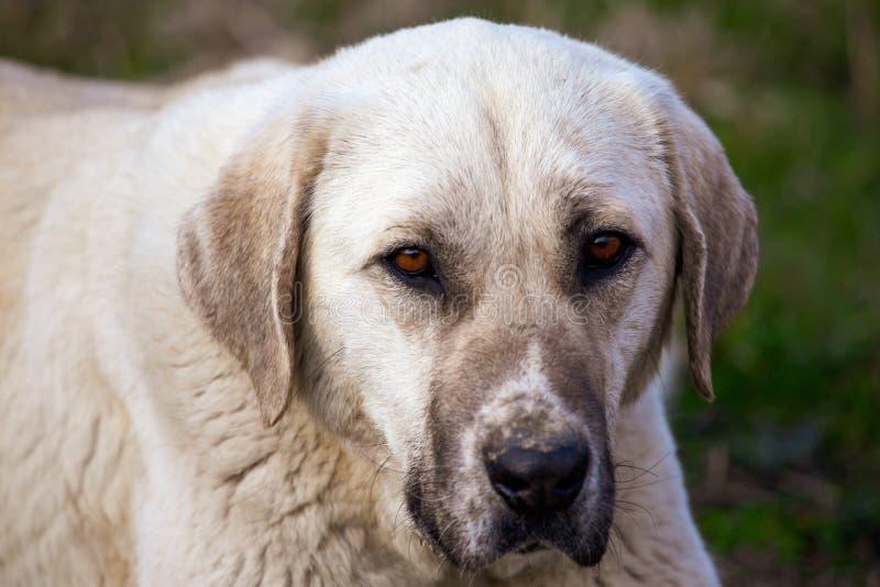 Portret van een hond in de middag royalty-vrije stock foto's