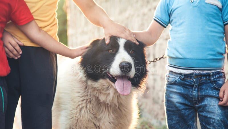 Portret van een hond Jongens en hond royalty-vrije stock foto