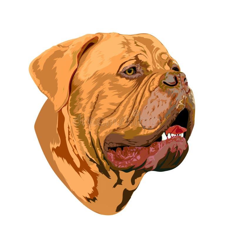 Portret van een hond van Bordeaux stock illustratie