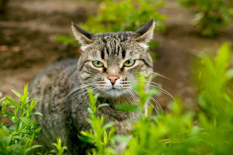Portret van een kat in het gras stock afbeeldingen