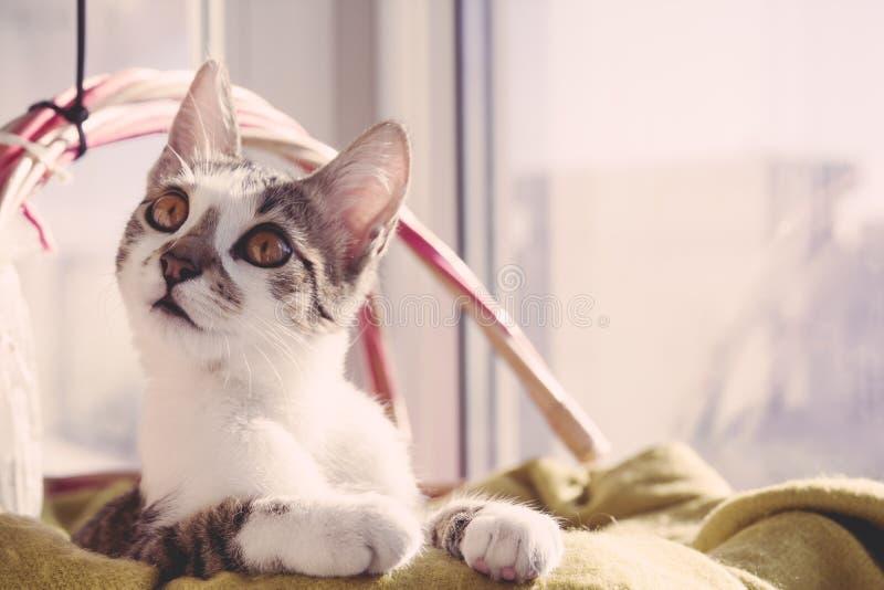 Portret van een kat op de mand stock afbeeldingen