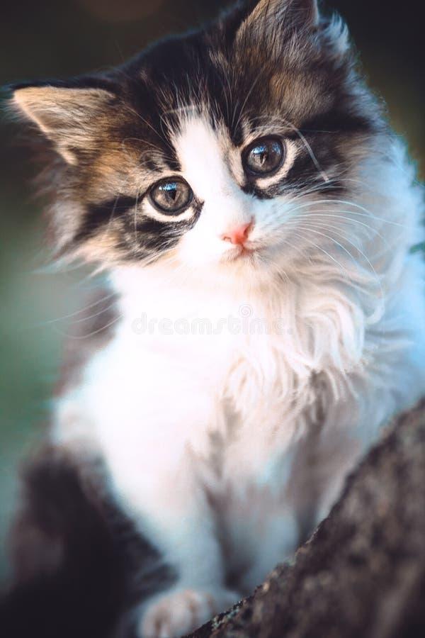 Portret van een katjeszitting op aard op een boom stock foto