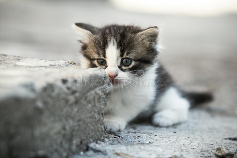 Portret van een klein eenzaam pasgeboren bang gemaakt katje op een concrete vloer in de werf stock afbeeldingen