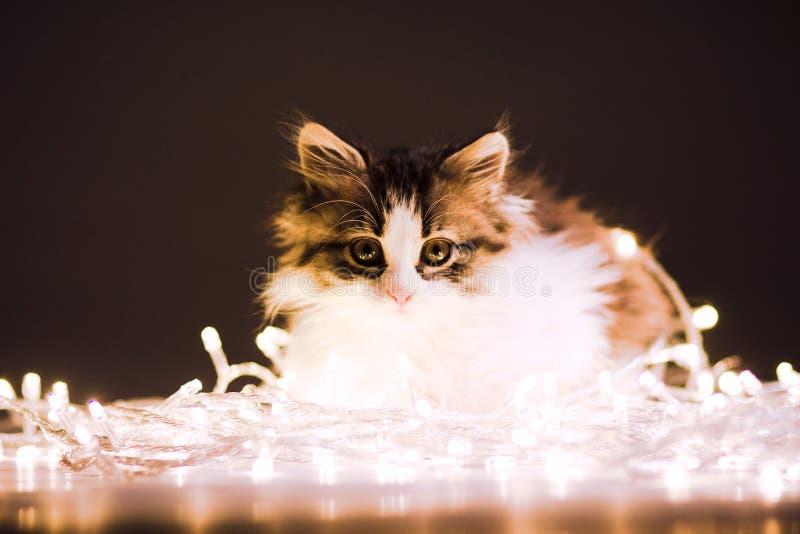 Portret van een klein katje in de lichten van een slinger royalty-vrije stock foto's