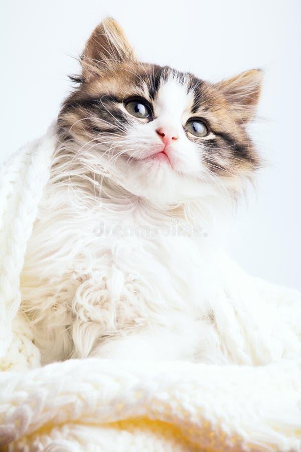 Portret van een klein katje in een witte gebreide plaid royalty-vrije stock foto
