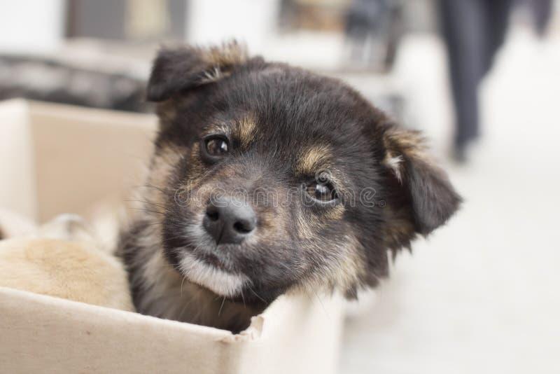 Portret van een klein verlaten puppy met droevige ogen op de straat, emoties van dieren stock fotografie
