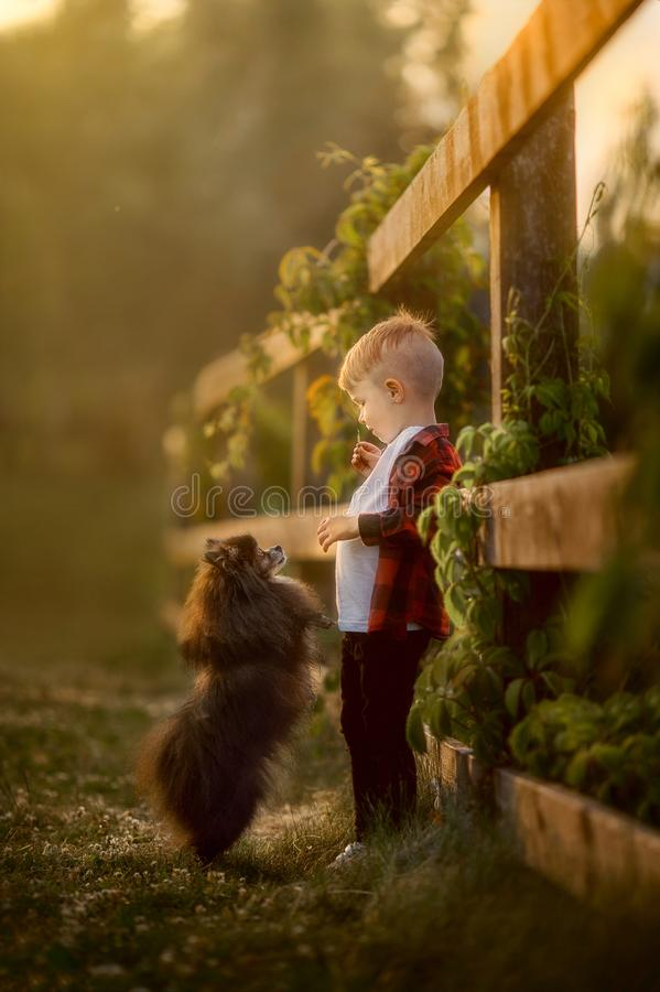 Portret van een kleine jongen met kleine hond in het park royalty-vrije stock afbeelding