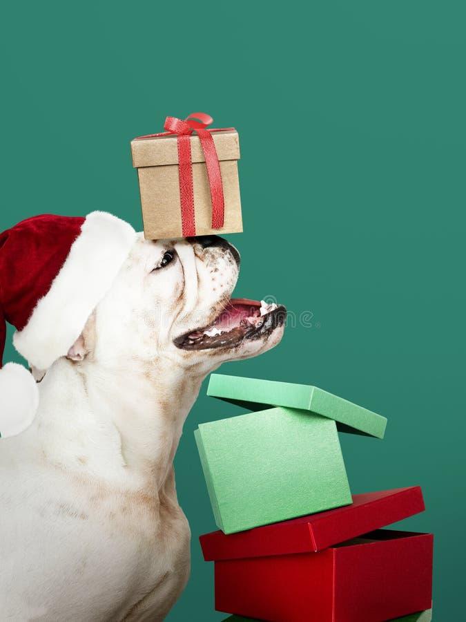 Portret van een leuk Buldogpuppy die een Kerstmanhoed dragen stock foto