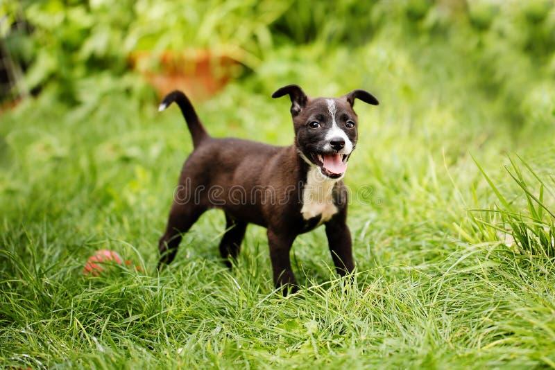 Portret van een leuk, gelukkig gemengd rassen klein puppy in zwarte, bruine en witte kleuren, bewaard van de straten, die in back royalty-vrije stock foto's