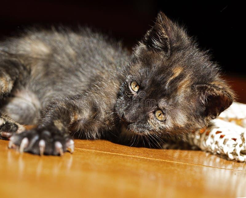 Portret van een leuk katje stock afbeeldingen