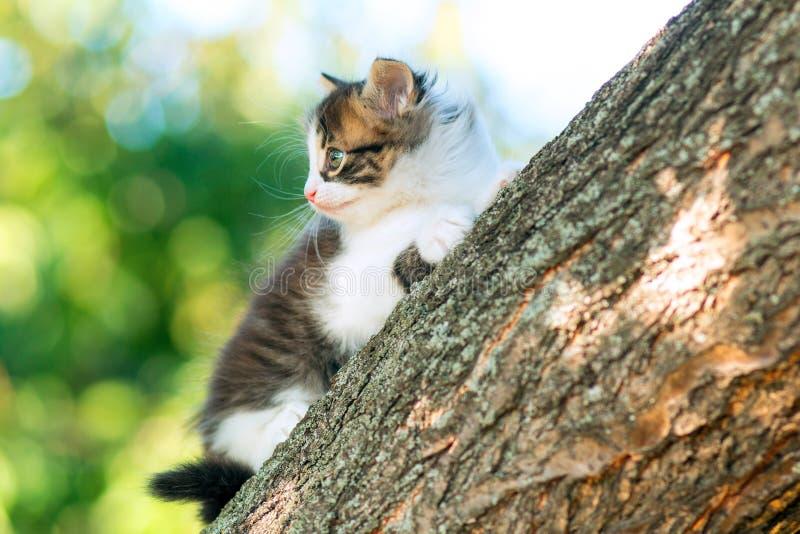 Portret van een leuk klein grappig katje die op een boomtak beklimmen in de aard stock afbeeldingen