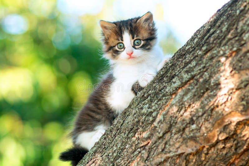 Portret van een leuk klein pluizig katje die op een boomtak beklimmen in de aard royalty-vrije stock foto