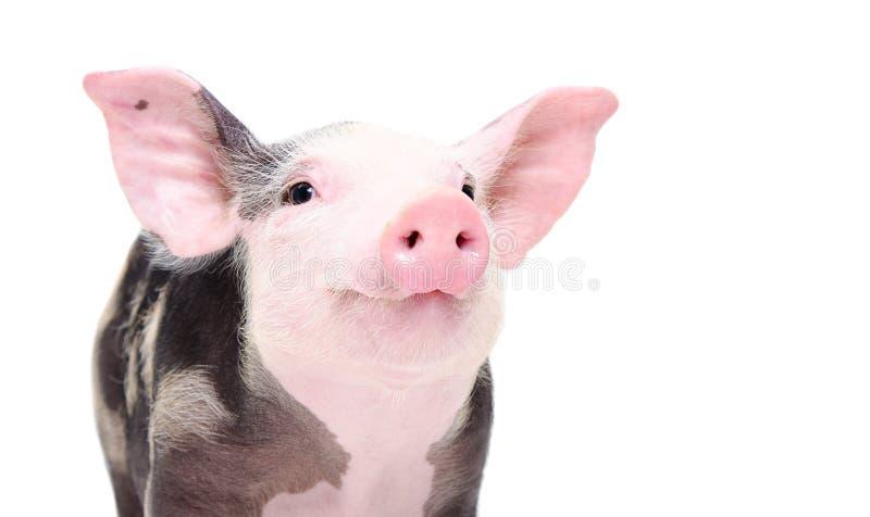 Portret van een leuk vrolijk varken stock afbeelding