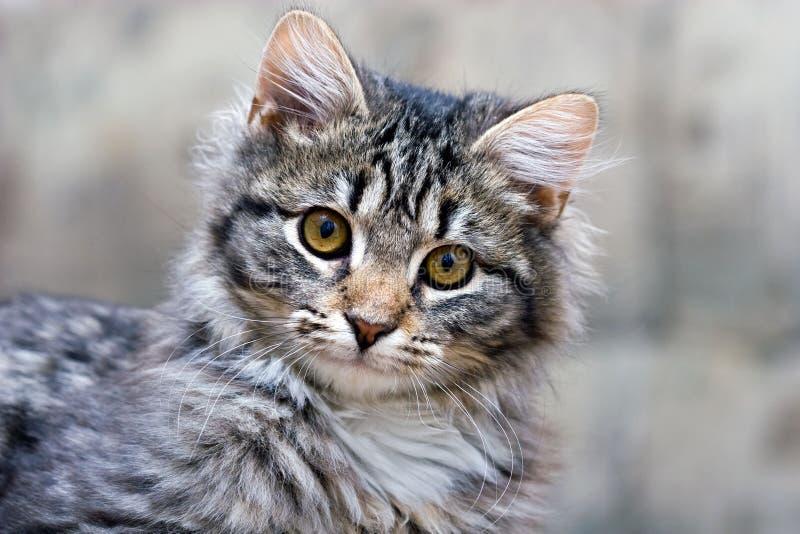 Portret van een mooi katten leuk aanbiddelijk katje stock foto