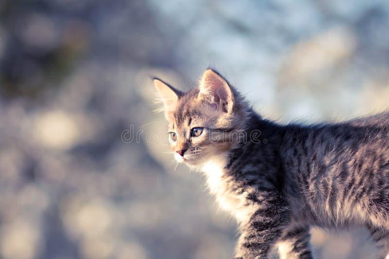 Portret van een mooi klein katje op de aard stock foto