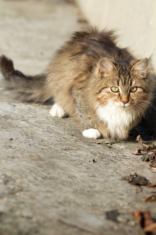Portret van een mooi klein katje op de aard stock afbeelding