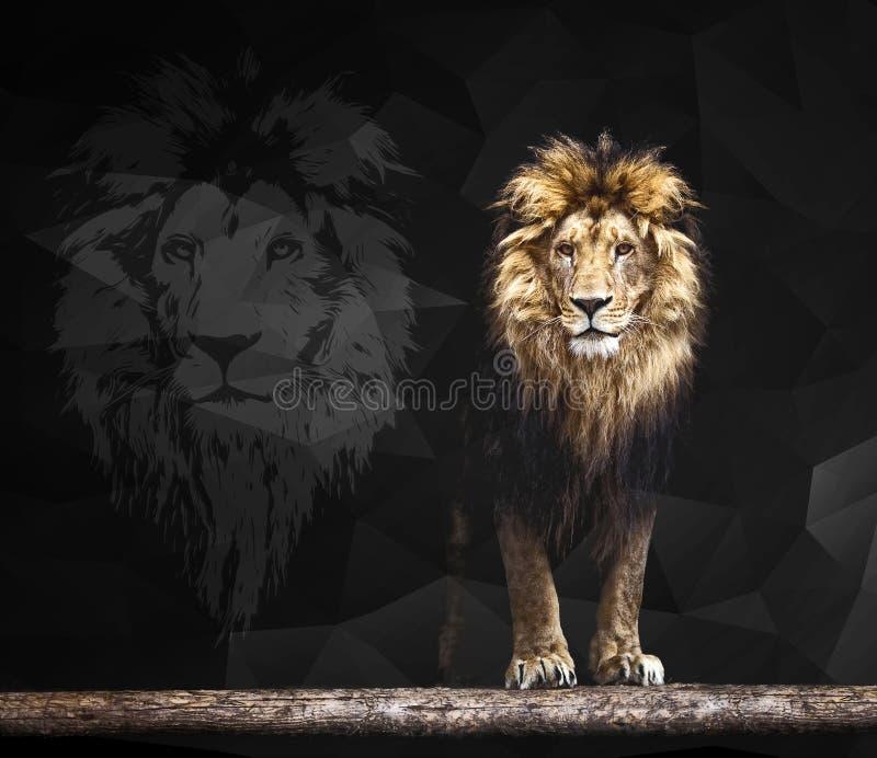Portret van een Mooi leeuw geometrisch patroon royalty-vrije stock foto's