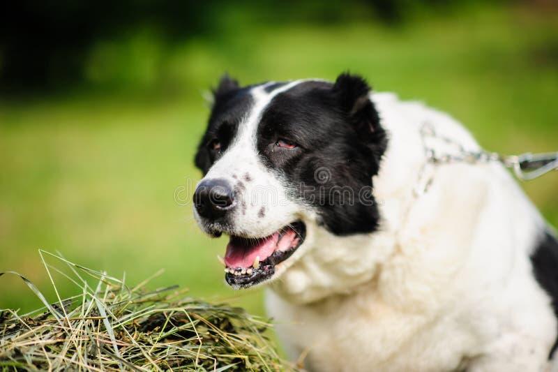 Portret van een mooie hond op hey stock fotografie