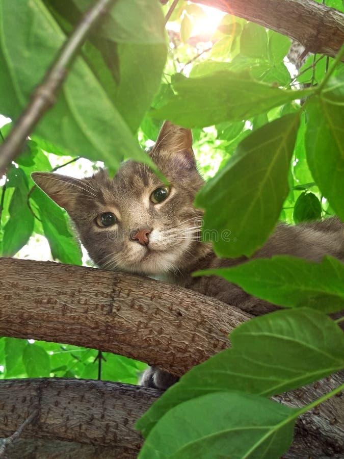 Portret van een mooie leuke kattenzitting op een boom die door groen gebladerte op een de zomer zonnige dag wordt omringd stock afbeeldingen