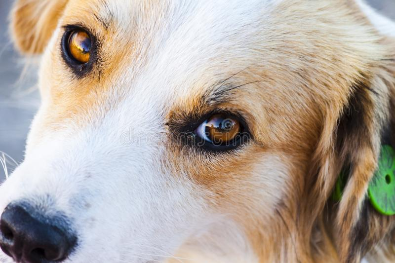 Portret van een mooie verdwaalde hond stock foto's