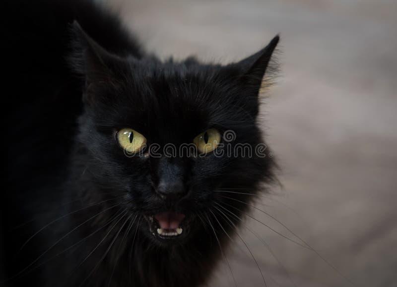 Download Portret Van Een Mooie Zwarte Kat Stock Foto - Afbeelding bestaande uit close, haren: 107700688