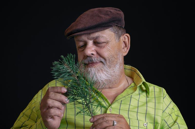 Portret van een nadenkende Kaukasische gebaarde hogere het bewonderen tak van pijnboom-boom royalty-vrije stock afbeelding