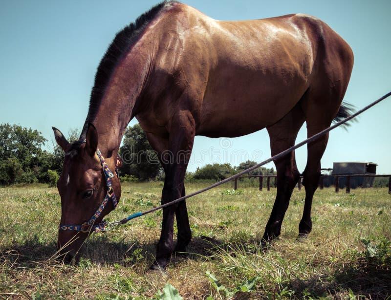 Portret van een paard royalty-vrije stock afbeeldingen