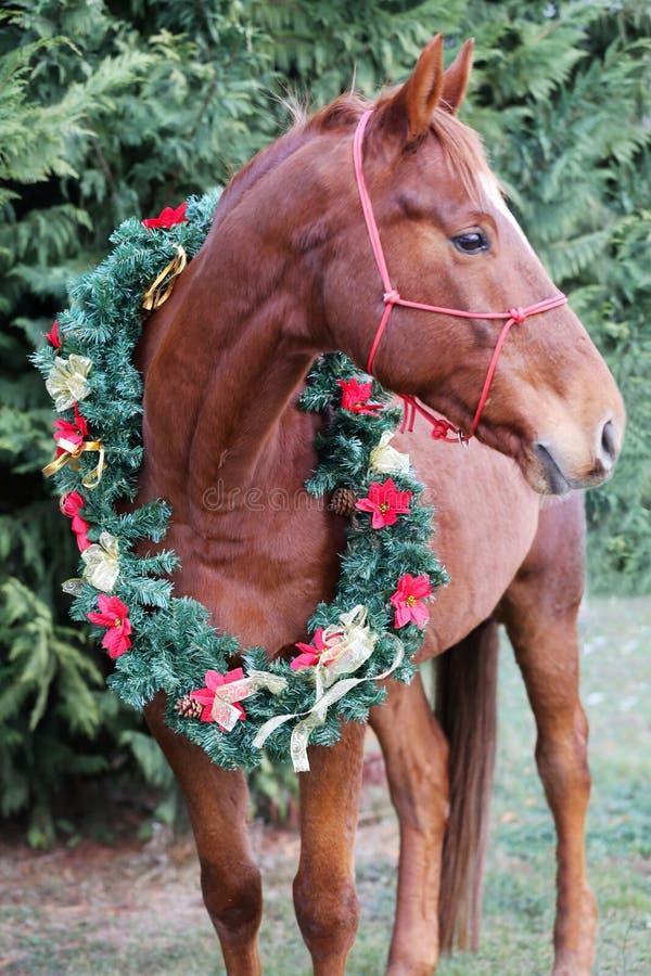 Portret van een paard die mooie decorati van de Kerstmisslinger dragen royalty-vrije stock afbeelding