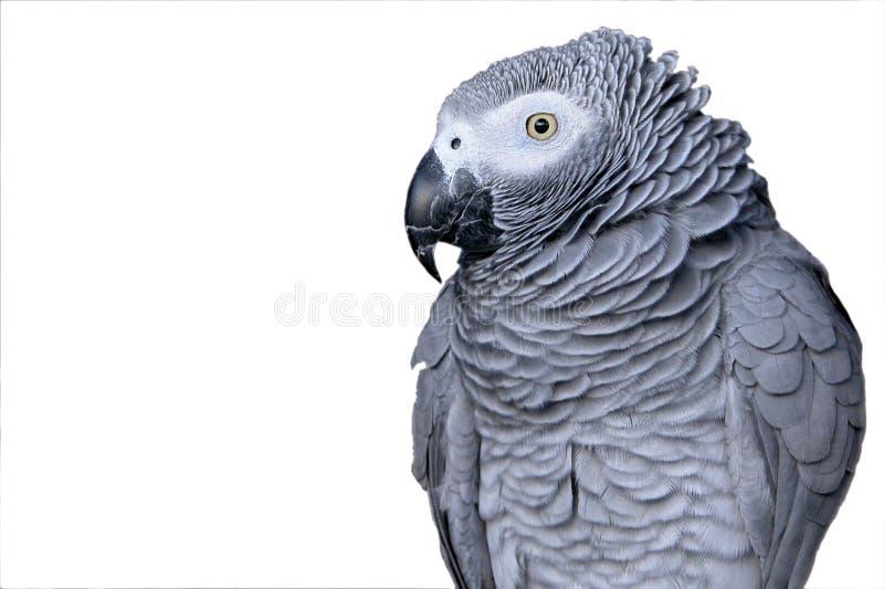 Portret van een papegaai stock foto's