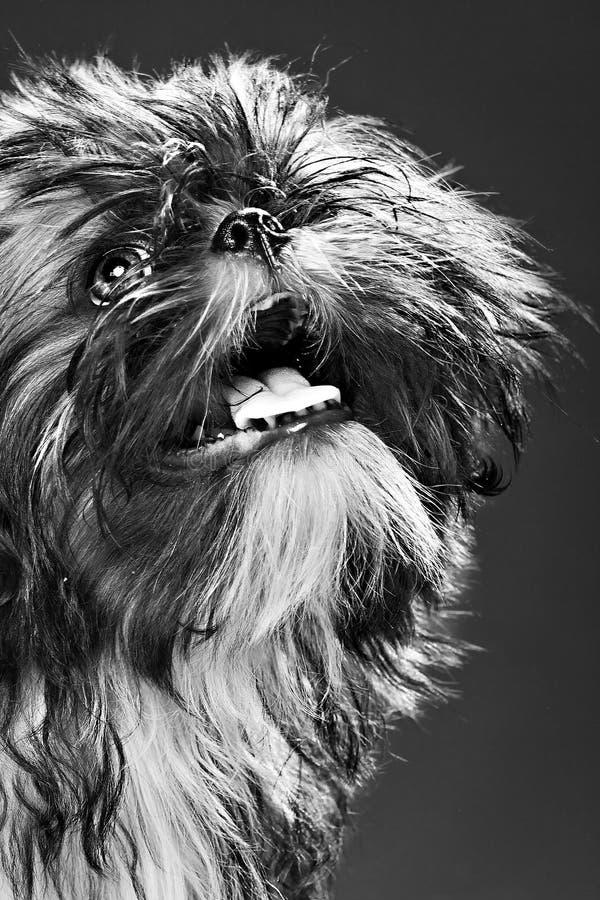 Portret van een puppy stock fotografie